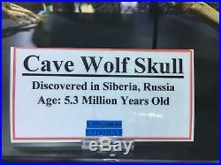 CAVE WOLF SKELETON Canis lupus spelaeus DINOSAUR FOSSIL PIRATE GOLD COINS