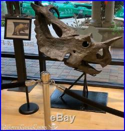 Centrosaurus Dinosaur Skull Rare Fossil Pirate Gold Coins Treasures Of Jurassic
