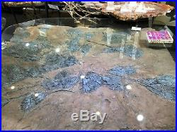 Crinoid Glass Table Fossil Pirate Gold Coins Treasures Of The Jurassic