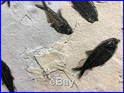 Fish Fossil Home Decor Wall Display Dinosaur Fossil Pirate Gold Coins Jurassic