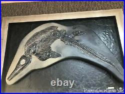 Ichthyosaur Dinosaur Fossil Ichthyosaurus Pirate Gold Coins Jurassic Treasure