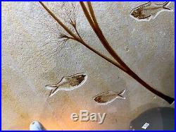 Palm Flower Fish Fossil 50 Myo Display Home Decor Dinosaur Pirate Gold Coins