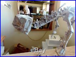 Psittacosaurus Pair Dinosaur Fossil Treasures Of The Jurassic Pirate Gold Coin